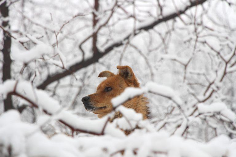 Winter macht deinem Hund zu schaffen